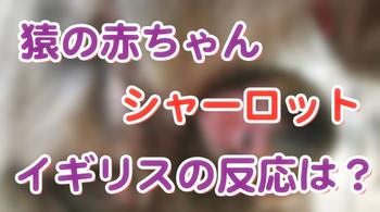スクリーンショット 2015-05-07 7.48.11.png